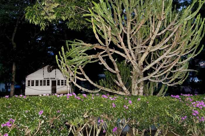 Trees 44