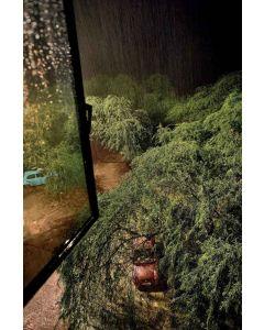 Trees 24