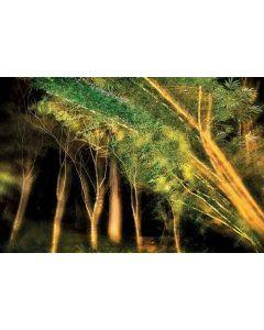 Trees 46