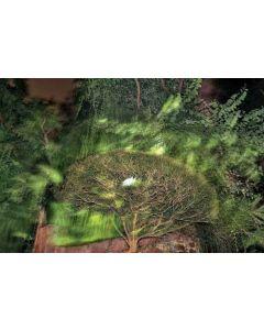 Trees 47
