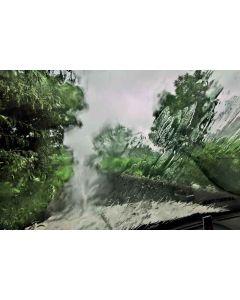 Trees 49