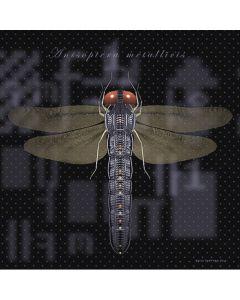 PROCESS-D (Anisoptera Matallicis)